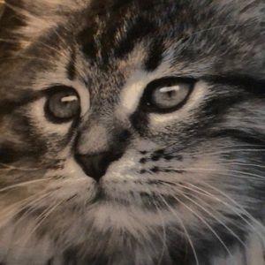 Kitten blanket